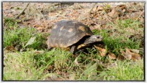 tortoise-boarding