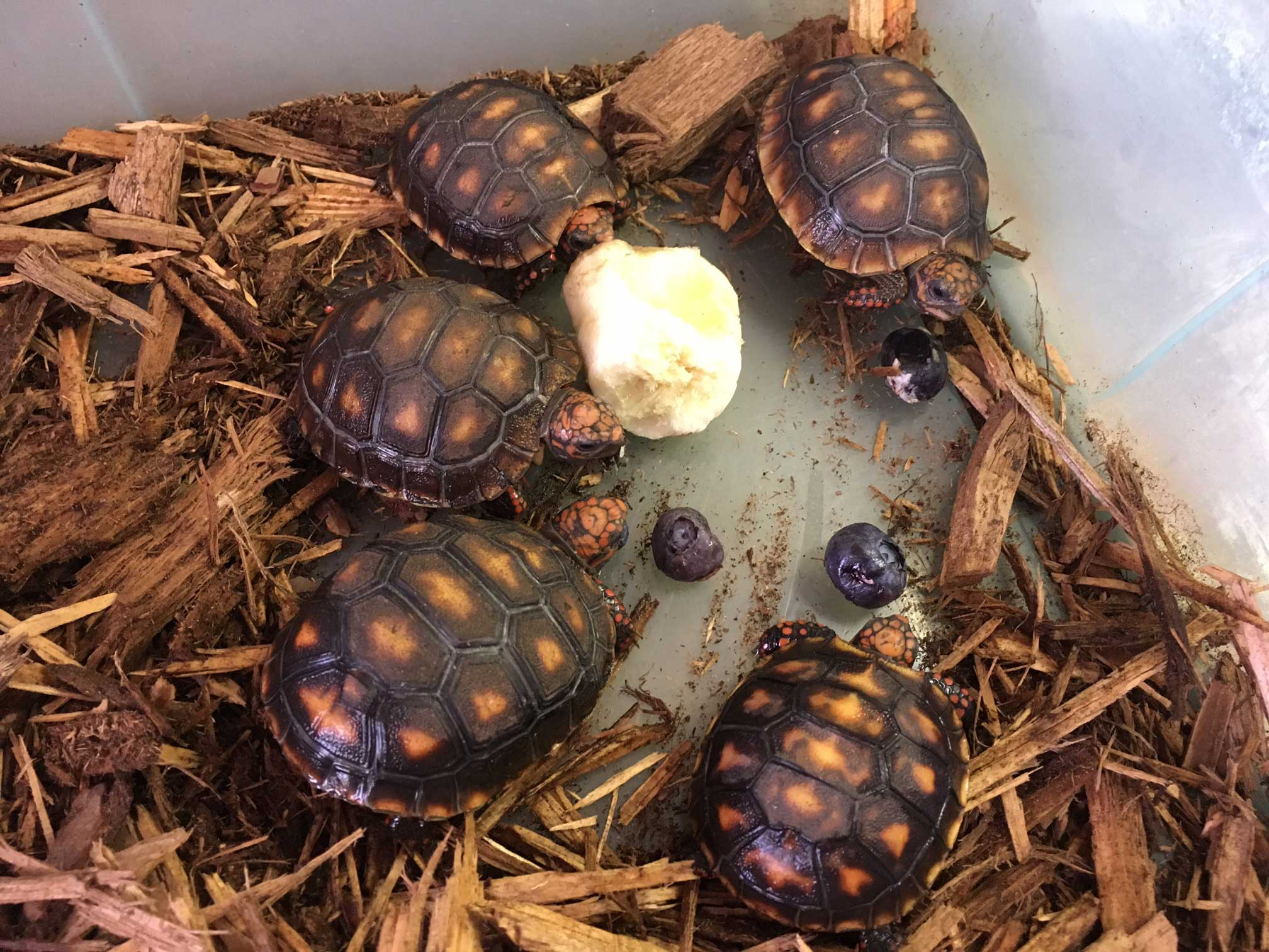 Best Tortoise Bedding