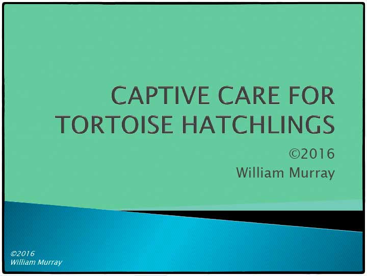 Tortoise Hatchling Care Guide