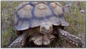 tortoise-boarding-image-2