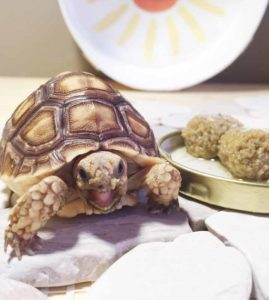 Customer Tortoise Images