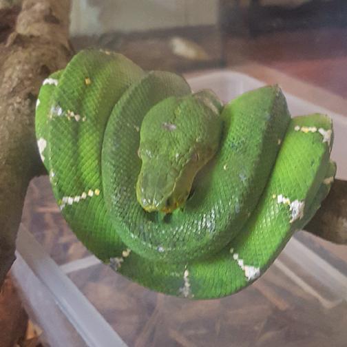 emerald feature